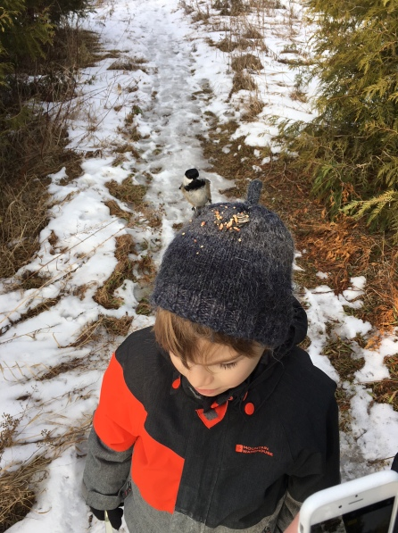 My son, being the smallest, has to hold his hand up high to get the birds to come down to eat from his hand. So he prefers to feed them from his tuque.